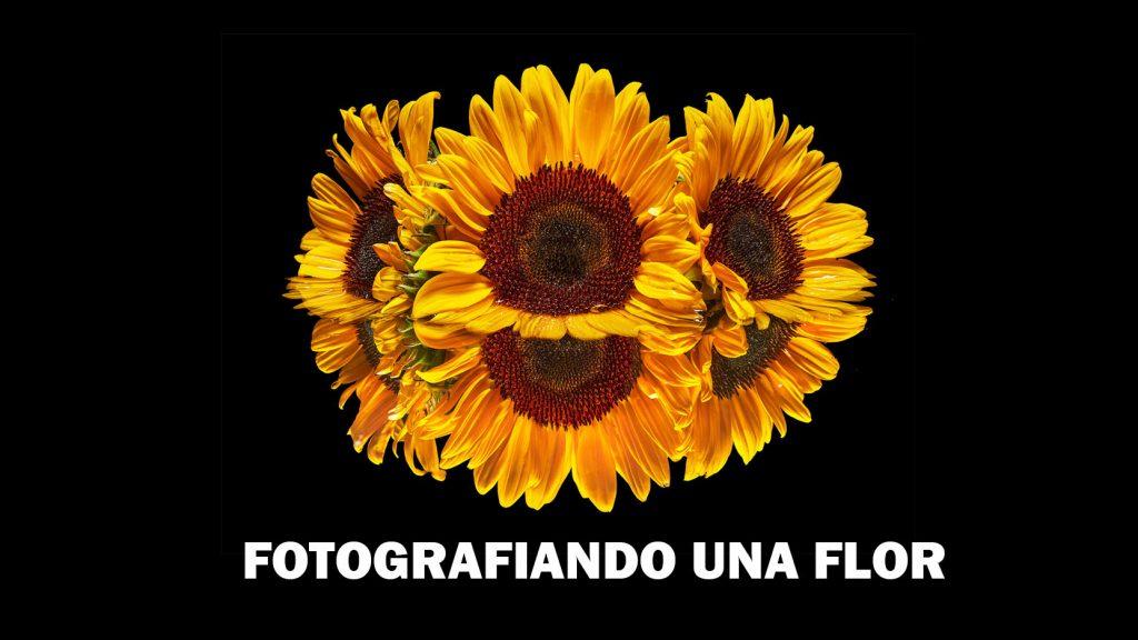 2020_09_17_fotografiandoFlor